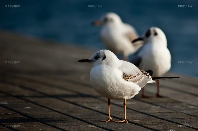 birds-628186