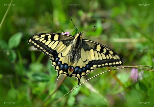 butterfly-491166