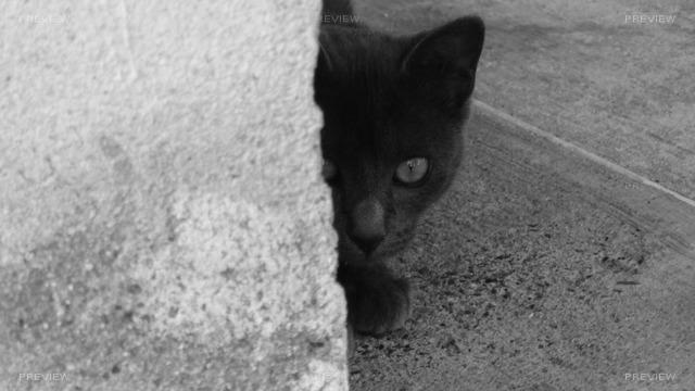 cat-173884
