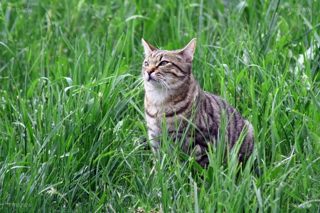 cat-739598