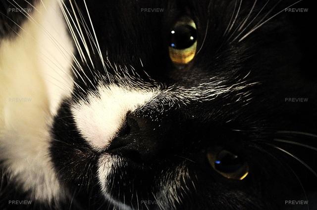 cat-743454