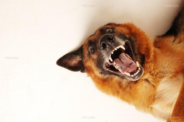 dog-684036