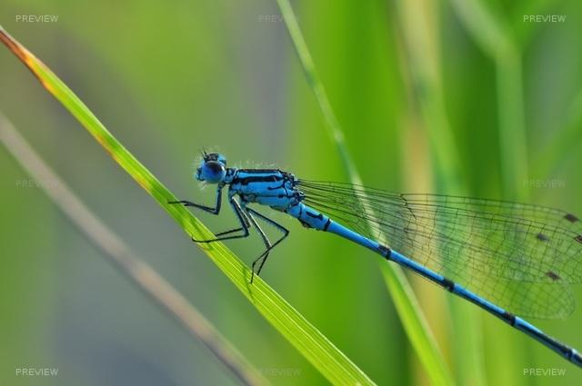 dragonfly-540839