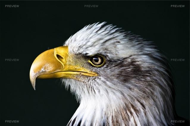 eagle-640272