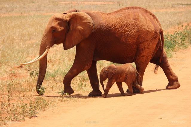 elephant-175798