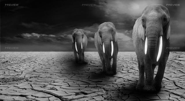 elephant-590020