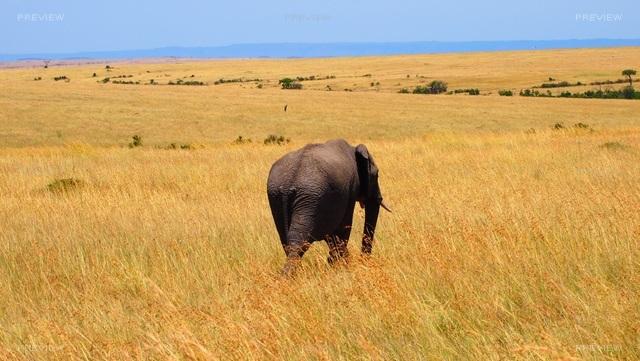 elephant-737412