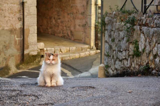 grumpy-cat-290861