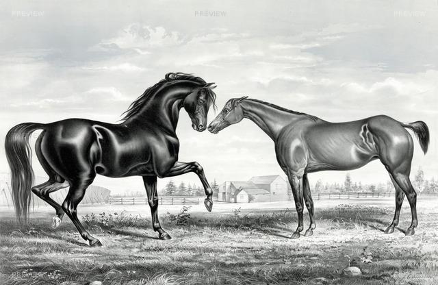 horse-316940