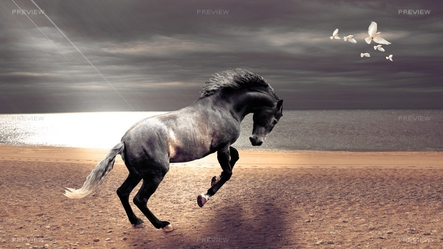 horse-744291