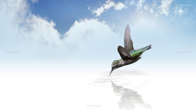 hummingbird-736890