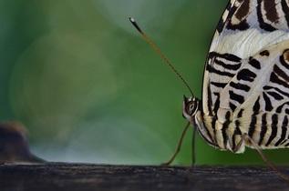 butterfly-608564