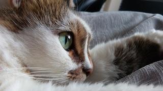 cat-674853