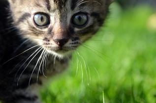 cat-727264