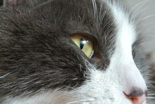 cat-729426