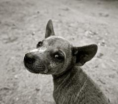 dog-589002