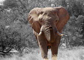 elephant-84186