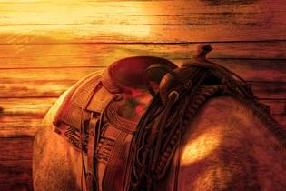 horses-back-587609