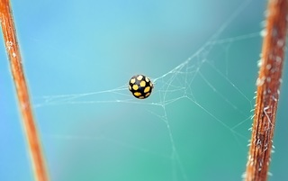 ladybug-462576