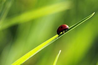 ladybug-702552