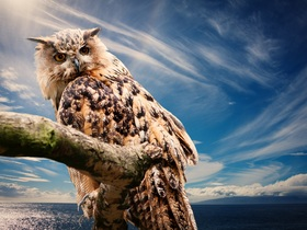 owl-591302