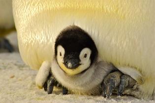 penguin-429125