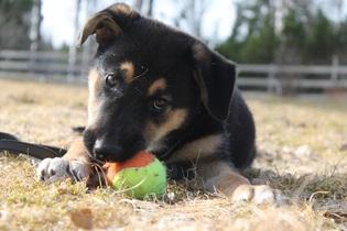 puppy-742596