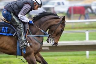 racehorse-419742