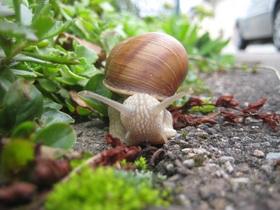 snail-414963