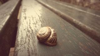 snail-623650