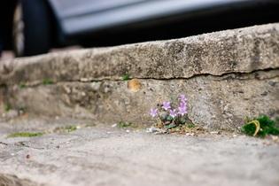 flowers-733163