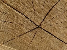 wood-438316