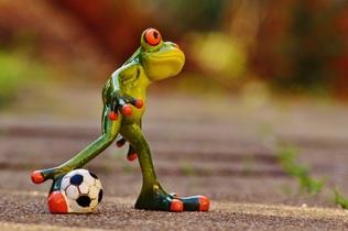 frog-1175599