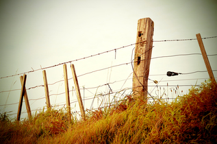 Fence-Filtered