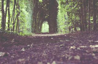 sander-zelhem-green-passage