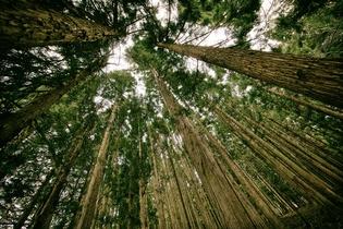Y1hediOeRoya666XCjYg_forest