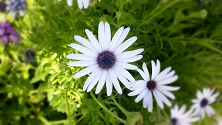 daisy-676481