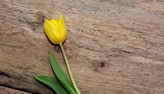 flower-711428