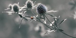 ladybug-662882