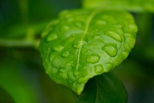 leaf-739284
