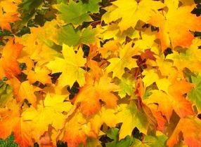 leaves-57427
