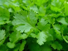 parsley-741996