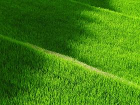 rice-terraces-419770