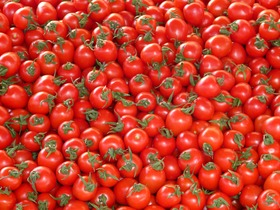 tomatoes-73913