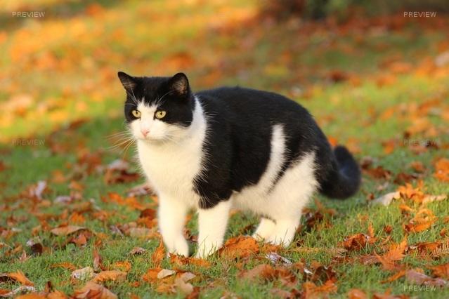 cat-744717