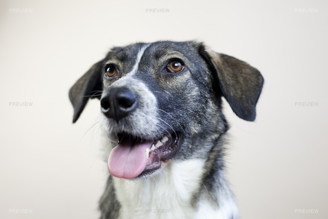 dog-625877