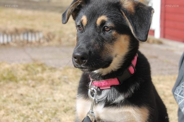 puppy-742599