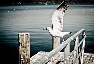 bird3H
