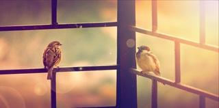 birds-731277