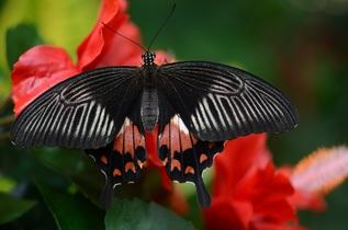 butterfly-546247